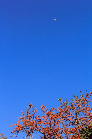 青空に咲く春