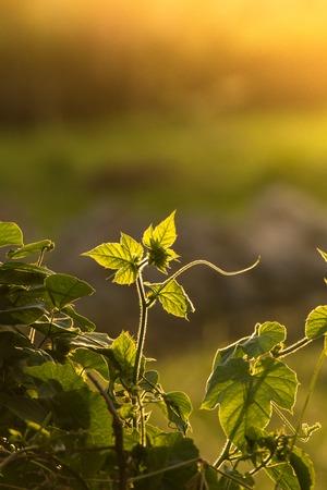 フィールドの暖かな光