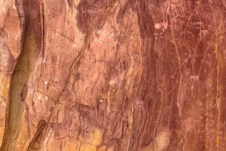 石になった木