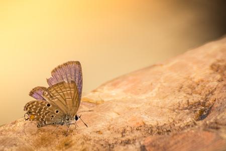 ฺ ี 岩の上の蝶 写真素材