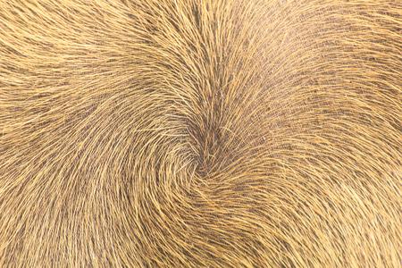 バッファロー肌髪 写真素材