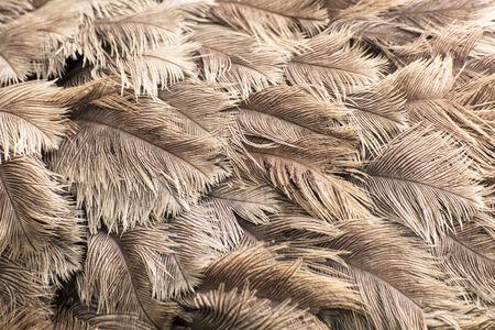 ダチョウの羽