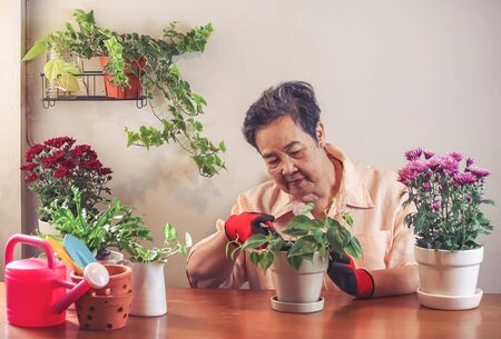 Happy Asian senior  woman  sitting at wooden table indoor , taking care of plant cutting dry leaves  ,smiling happily to her plants in plant pot.Gadening concept.
