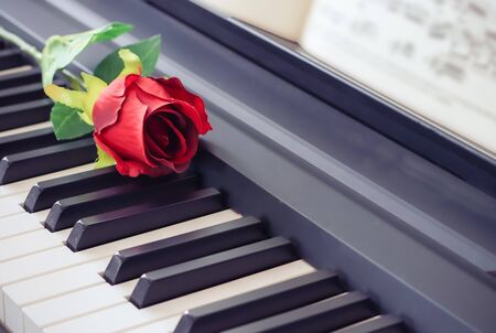 Music and love concept.Red rose on piano keyboard.selective focus.
