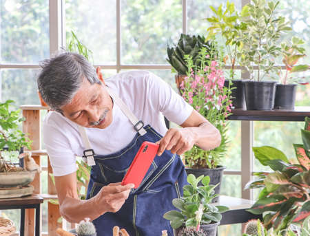 Senior people lifestyle and gardening concept. Active Asian elderly male gardener standing in plant shop indoor,wearing bib taking photo of his plant by mobile phone and smiling happily.