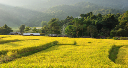 terraced field: Terraced rice field in sunset Chiang mai, Thailand