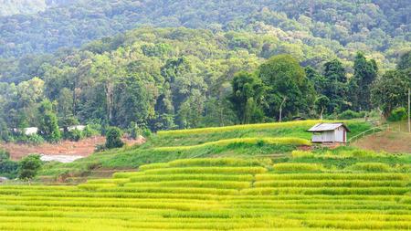Terraced rice field, Ban Mae Klang Luang(local name), Chiang Mai Thailand. Stock Photo