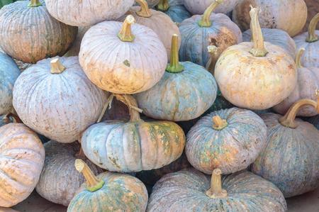 Heap of Thai pumpkins sale in market.