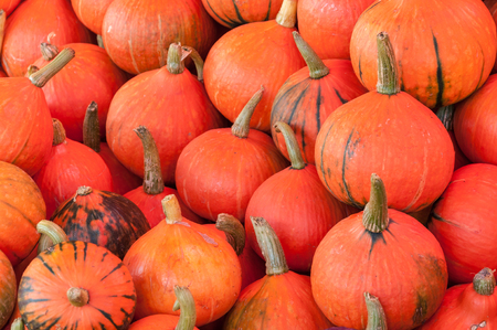 Fresh pumpkins on sale stand in market. Stock Photo