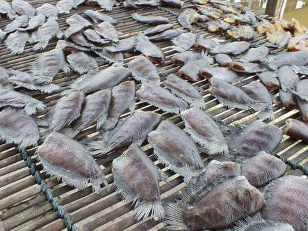 gourami: Gourami Stock Photo