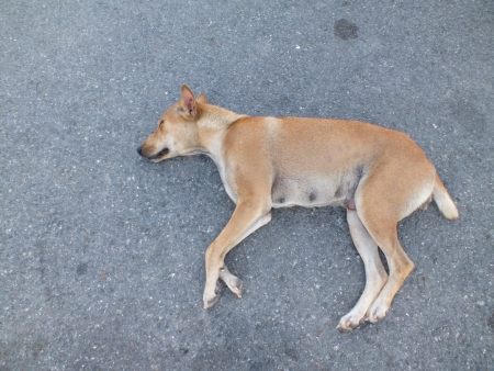 Sleeping dog Stock Photo - 17216266