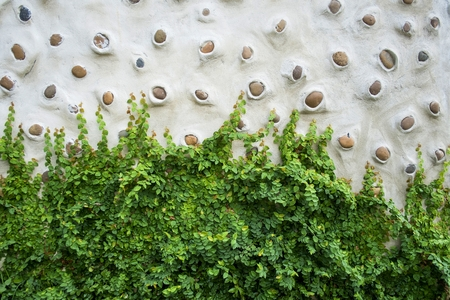 scum: Green creeper on cement wall Stock Photo