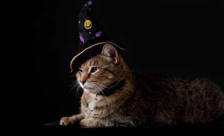 Cute tabby cat wearing witches hat isolated on black background with copy space