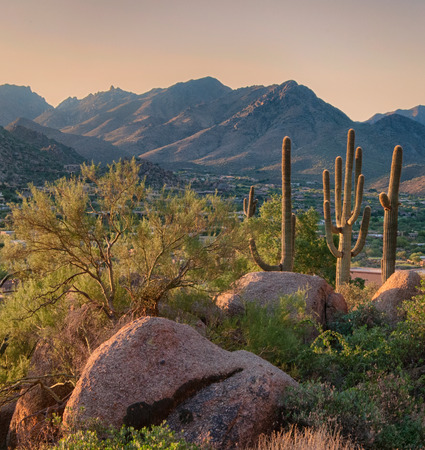 Three saguaro cacti stand in the desert with a mountain range in background in Scottsdale Arizona. Stock Photo