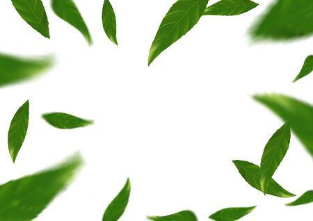 business graphics: Flying tree fresh leaves over white layout - abstract background. Green spring Leaf fly. Natural beauty & freshness design concept. Vector illustration Illustration