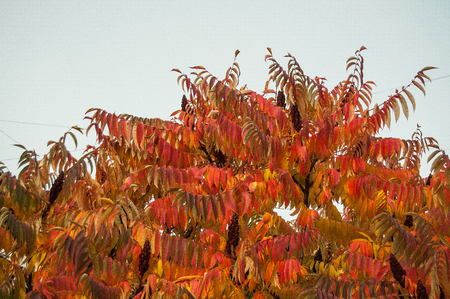 Autumn leaves on tree, place for text. Tree and yellowed leaves
