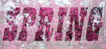 Conceptual collage in form of word Spring. Word from photo of spring