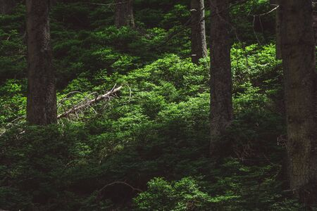Rays of light in dark forest. Little greens in the forest