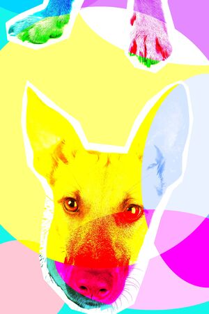 Illustration of head and paw of dog on bright background. Contemporary art collage with details Imagens