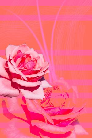Illustration of coral color with flowers. Contemporary bright art collage Imagens - 129011843