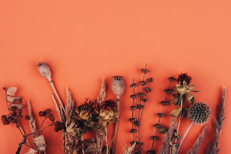 Composition of a variety of dried flowers close-up on a peach background with place for text