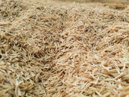 residue: The detail of rice husks for background