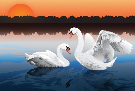 two beautiful swans in lake, romantic moment, love theme background. Vector illustration