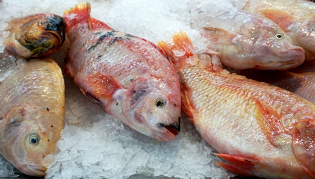 Fresh fish on ice at market. Freezing and raw food. Frozen fresh fish background.