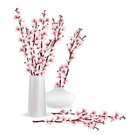 fleur cerisier: Cherry blossom, sakura branches in vases on white background. Flower arrangement. Flower of Springtime. Vector illustration.