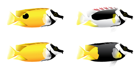 Vector illustration of colorful fox face fish or rabbit fish on white background. Vettoriali