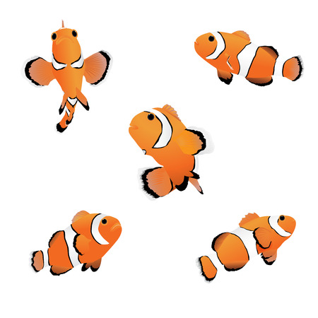 Vector illustration of reef fish, clown fish or anemone fish on white background. Illustration