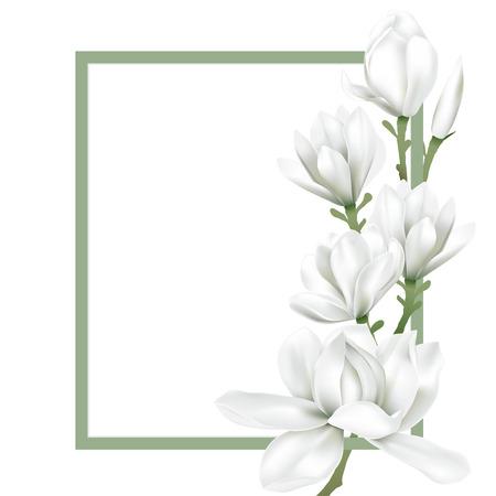Der grüne Rahmen, der mit weißer Magnolienblüte verziert wird, blüht auf weißem Hintergrund. Vektor-Illustration. Vektorgrafik