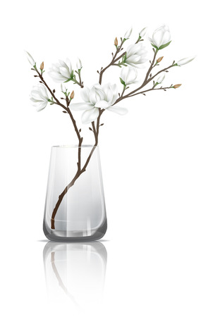 reflection: Branches of white magnolia flowers in a clear glass with reflection on the floor. Vector illustration on white background.