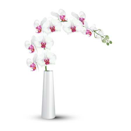 A branch of tropical orchid flower known as moth orchid or white phalaenopsis orchid blossom with pink middle in ceramic vase on white background. Vector realistic illustrator. Stock Illustratie