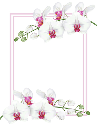 Branches of tropical orchid flower known as moth orchid or white phalaenopsis orchid blossom with pink middle with pink frame on white background. Vector realistic illustrator.