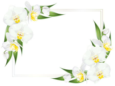 Square frame decorated with branches of tropical orchid flower known as moth orchid or white phalaenopsis orchid blossom with yellow middle and green leaves on white background. Vector realistic illustrator. Stock Illustratie