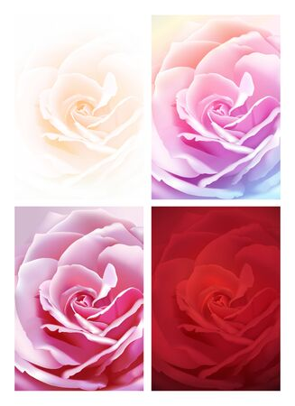 Set of realistic colorful rose flowers, close up picture backgrounds. Vector illustration.