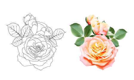 Sweet color rose bouquet and black and white roses outlines. Set of flower roses on white background. Vector illustration Stock Illustratie