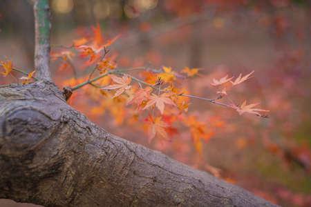 Autumn landscape background.