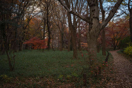 Autumn view in the park