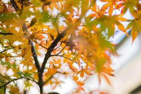 Hakone town with autumn background.