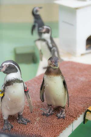 Zoo's penguins