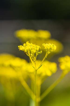 Bright yellow woman flower Фото со стока