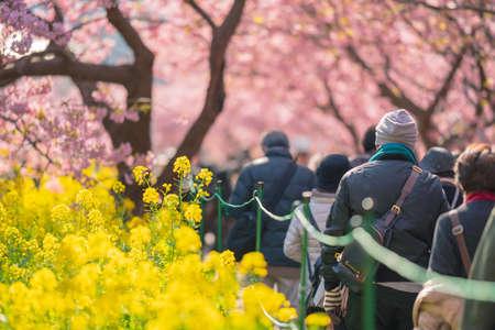 Izu Kawazu Cherry Blossom Festival Фото со стока