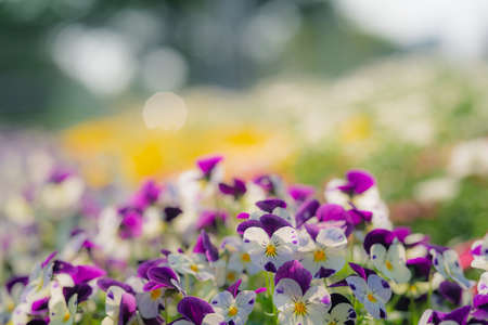 a pansy flower that blooms in a colorful way