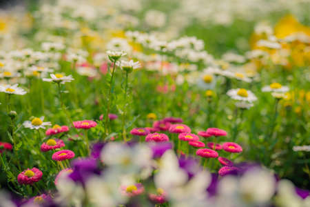 Dandelions blooming in the park in spring
