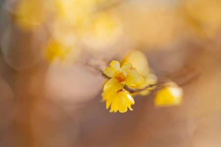 Ko kanai park plum. plum blossoms