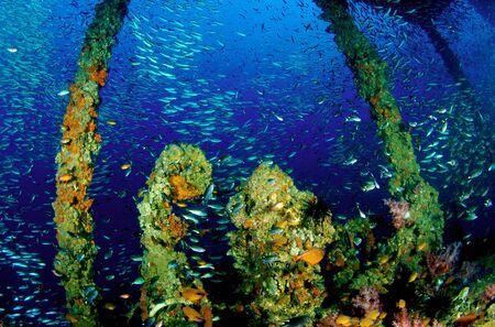 King Cruiser Wreck, PP Island, Thailand