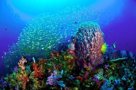 Coral Reef, Similan National Park, Thailand