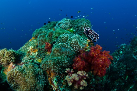 coral reef Stock Photo - 12721846